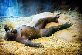 Image result for pictures of relaxation
