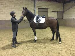 Horses For Sale Ponies For Sale Equirodi Uk