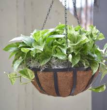 ... Large-size of Swish Outdoor Hanging Plants Then Spring in Indoor  Hanging Plants ...
