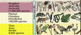Biodiversity Classification Chart Biological Diversity I