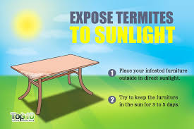 expose termites to sunlight
