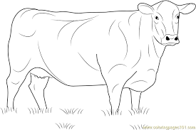 Small Picture Angus Cow Coloring Page Free Cow Coloring Pages