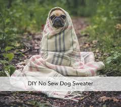 diy no sew dog sweaters by half pint