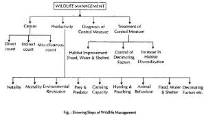 essay on wildlife management top essays geography steps of wildlife management