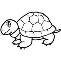 Small Picture Turtle Coloring Pages Surfnetkids