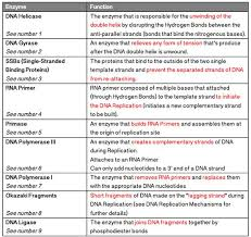 image result for dna replication and enzymes genetics genomics  image result for dna replication and enzymes genetics genomics essay prompts genetics and prompts