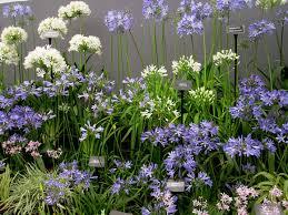 Small Picture Small Flower Garden Design Ideas