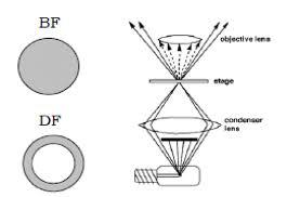 dark field microscopy fig 5a dark field microscopy 7 scientific diagram