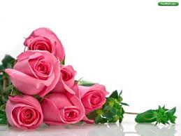 valentine roses wallpaper. Contemporary Valentine Roses Wallpaper Download Free Valentines  And Valentine A