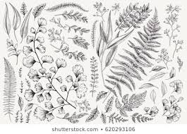 Botanical Engravings Images Stock Photos Vectors Shutterstock
