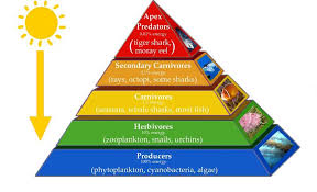 Ecosystem Pyramid Chart 3 Major Types Of Ecological Pyramids Pyramid Of Number