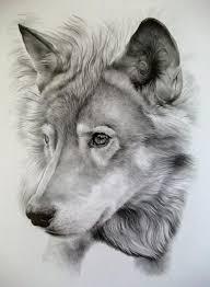 tribal wolf drawings in pencil. Wonderful Tribal Imagenes De Dibujos Perros  De Bonitos Tribal Wolf  TattoosBeautiful DrawingsBeautiful  Inside Drawings In Pencil