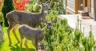 how to keep deer out of your garden. How To Keep Deer Out Of Your Garden