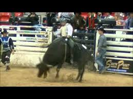 Bull Riding - Dustin Bowen - 2014 Benny Binion Bucking Horse and Bull Sale  - YouTube