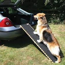 image of using dog ramp for car