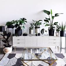 decor plants provide they absorb harmful chemicals and regulate humidity and they re an inexpensive way to add instant colour and glamour to home