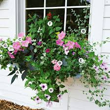 Container Gardening Ideas For Full Sun Image Dimension X Pixel Container Garden Ideas Full Sun