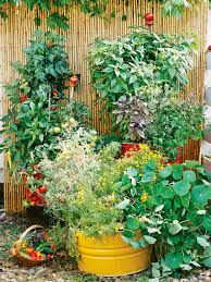 Small Picture Planning Your First Vegetable Garden