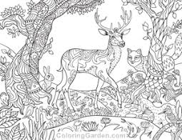 Small Picture New Adult Coloring Pages Fairy Forest Creatures Pug and More