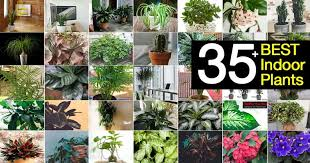 35 of the best indoor plants for your
