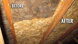 mold in attic. Fine Attic Before And After Mold Removal In Attic R