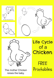 Small Picture Chicken Life Cycle FREE Printable Coloring Pages