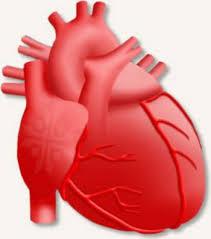 Легочное сердце реферат ⋆ Лечение Сердца Острое и хроническое легочное сердце