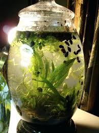 indoor water garden indoor water garden using water loving perennials diy indoor
