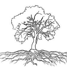 Small Picture Oak Tree Massive Roots Oak Tree With Roots Drawing Everything