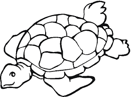Small Picture Sea turtle coloring pages to print ColoringStar