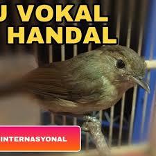 Hanya saja burung jantan mampu berbunyi lebih. Suara Pikat Burung Flamboyan Contoh Lif Co Id