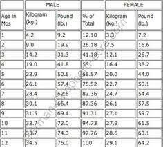 Doberman Growth Chart Female 47 Best 3 My Dog Images Dogs German Shepherd Dogs Dogs