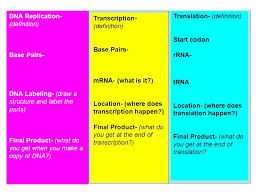 Dna Replication Definition Protein Synthesis Foldable Ahsge Std 8 Outside Translation
