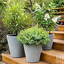 best shrubs for containers better