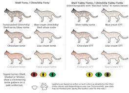 Cat Color Chart Cat Colors Chart Google Search Cat Colors Cat Pattern