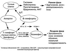 Реферат Эффективность и безопасность цетиризина Летизена у  Эффективность и безопасность цетиризина Летизена у больных аллергическим ринитом