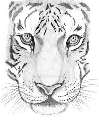 tiger face drawing pencil.  Face How To Draw A Tiger Face Step By  Google Search Intended Tiger Face Drawing Pencil E