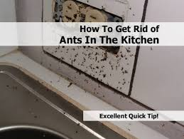 get rid of ants in kitchen how to get rid ants in the kitchen