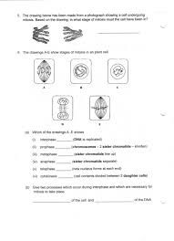Mitosis Worksheet Cells Photosynthesis Pinterest Cell Growth ...