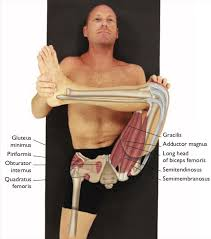 The headstand pose involves going against gravity. An Anatomical Breakdown Of Leg Behind Head Yoganatomy