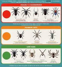 Australian House Spiders Chart Spiders Of Texas Google Search Spider Identification