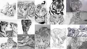 эскизы тату тигр клуб татуировки фото тату значения эскизы