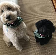 what kind of rug should you get if you have pets it s a question many homeowners face as their pets while adorable and loving can do some serious damage