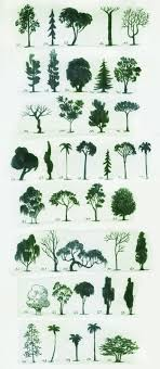 Different trees. You can never have enough drawings of trees. LW trees,  trees, & more trees