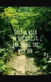 A Walk Thru The Woods Quote Quotes Pinterest Quotes Into The Classy Woods Quotes