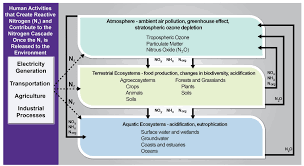 biogeochemical cycles national climate assessment figure 15 2 human activities that form reactive nitrogen and resulting consequences in environmental