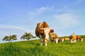 <b>Animal</b>-Derived Ingredients Resource | Living | PETA