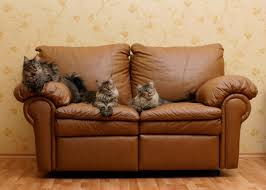 a cat on a leather couch