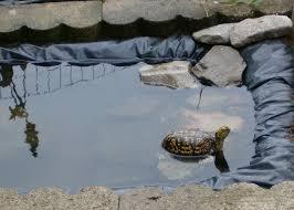 outdoor water turtle setup