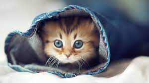 Really Cute Cat Wallpapers - Top Free ...
